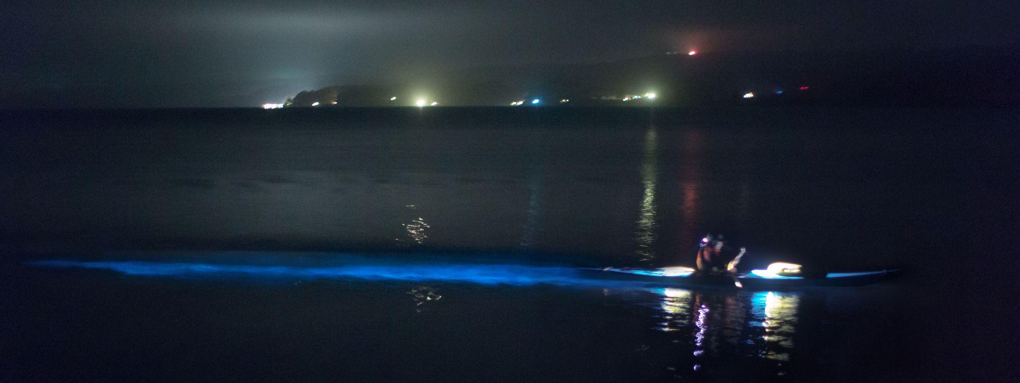 North Bay Bioluminescence Tour