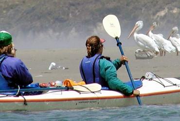 deb_pelicanspagetop
